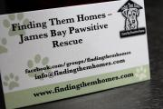 RaceSim1 Puppy Dog FindingThemHomes Business Card