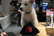 RaceSim1 Puppy Dog with Cap Horizontal