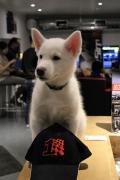 RaceSim1 Puppy Dog with Cap